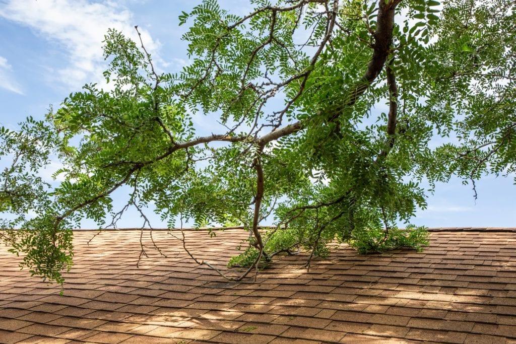 Tree limb touching the roof